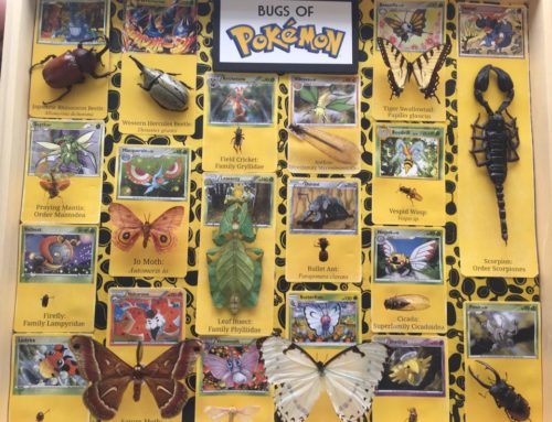 Bugs of Pokemon