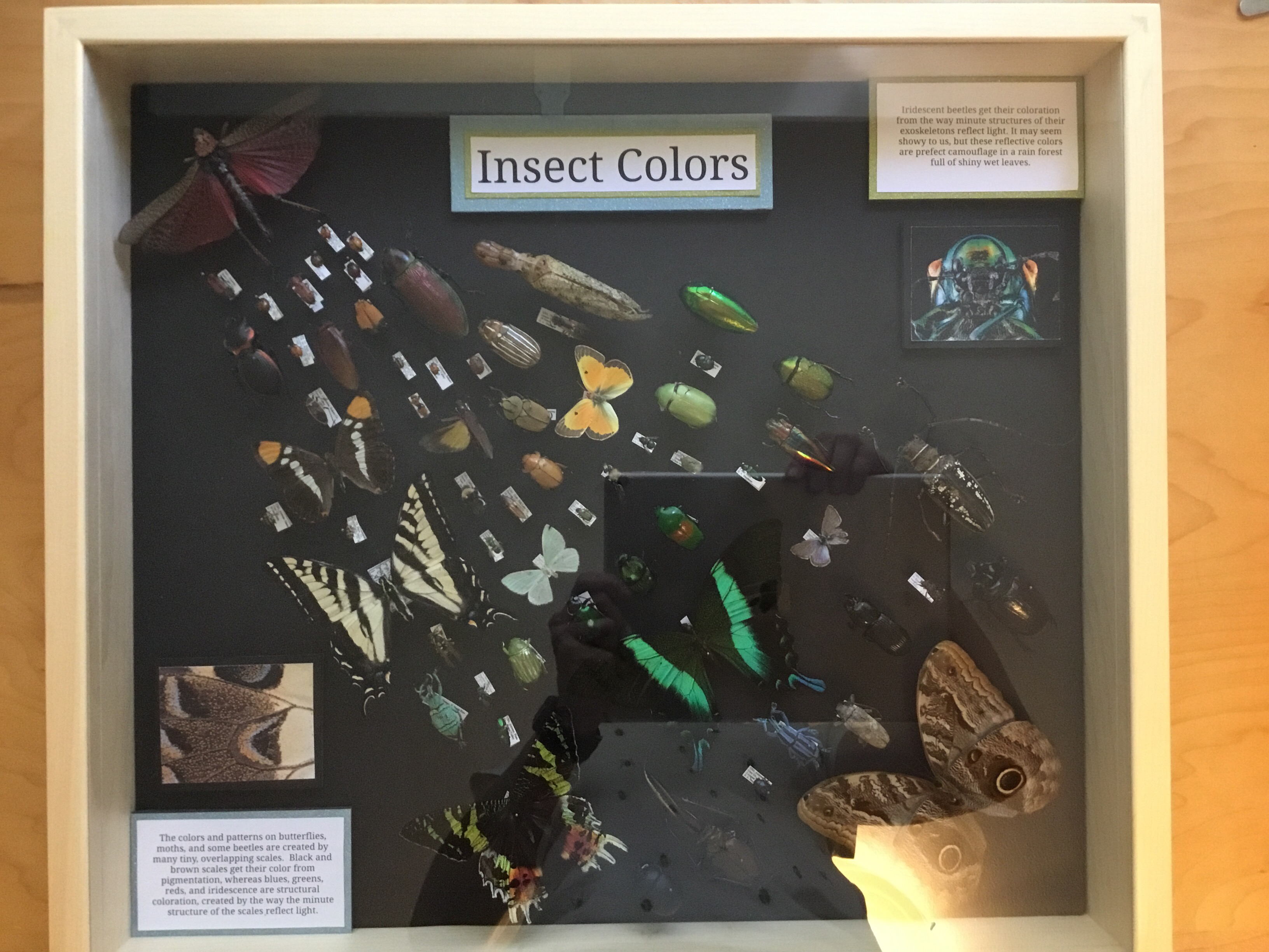 Insect Display Rentals